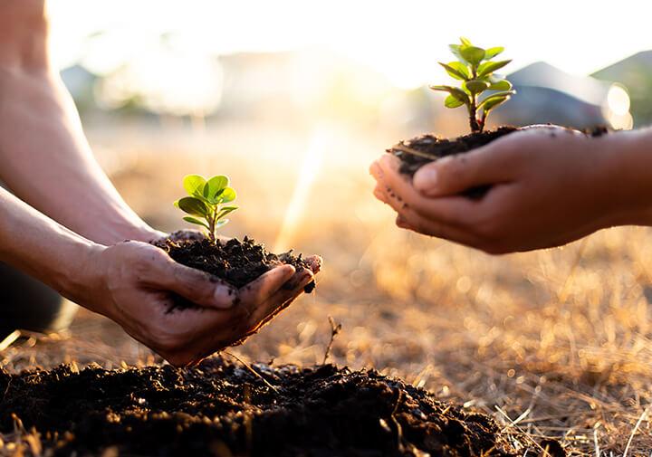Tree-Planted