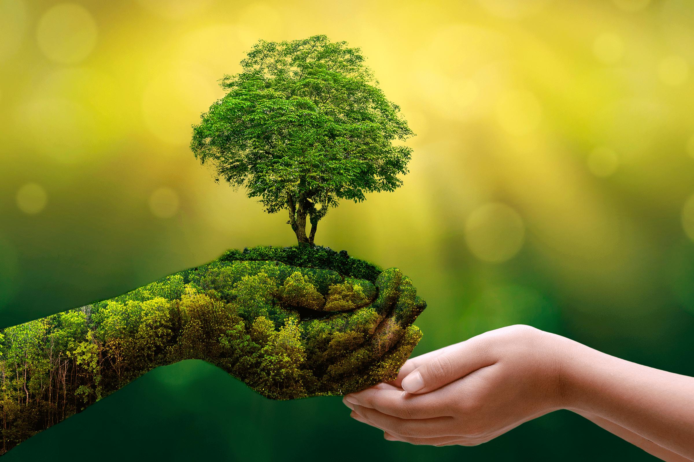 Eco-Awareness