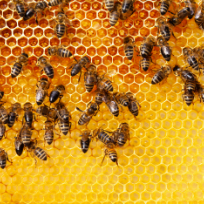 https://static.digypet.com/uploads/service_type/beekeeping.png