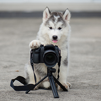 https://static.digypet.com/uploads/service_type/dog_with_camera.jpg