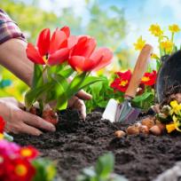 https://static.digypet.com/uploads/service_type/gardening.png